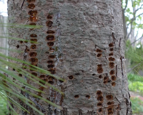 How to Tell If My Trees Are Being Attacked by Pests